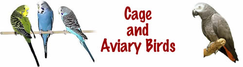 Cage and Aviary Birds Title