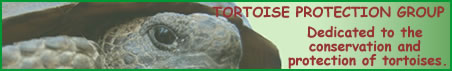 http://www.tortoise-protection-group.org.uk
